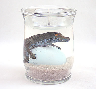 Gator Hatching From Egg Gel Candle Refillable Forever Candle